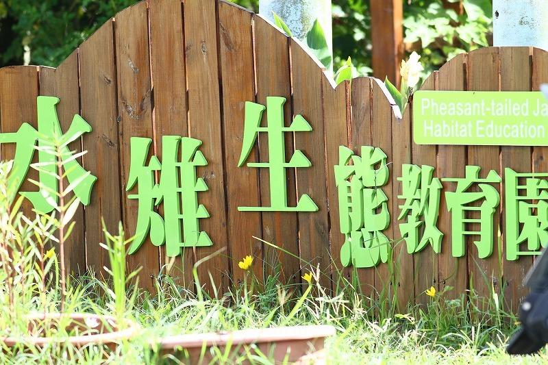 台湾鳥見旅行(その3)・・・_c0213607_17585564.jpg