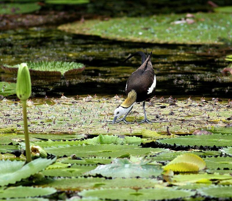 台湾鳥見旅行(その3)・・・_c0213607_18051640.jpg