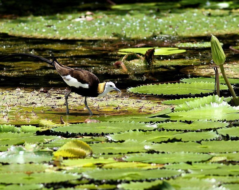 台湾鳥見旅行(その3)・・・_c0213607_18052132.jpg