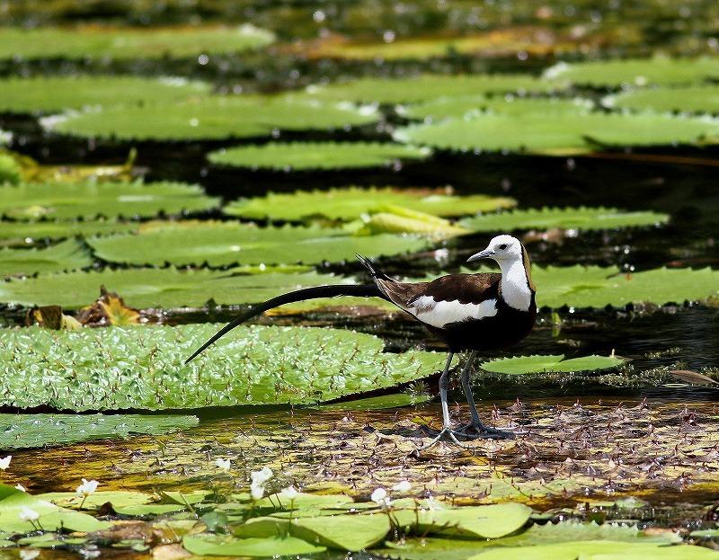 台湾鳥見旅行(その3)・・・_c0213607_18052584.jpg