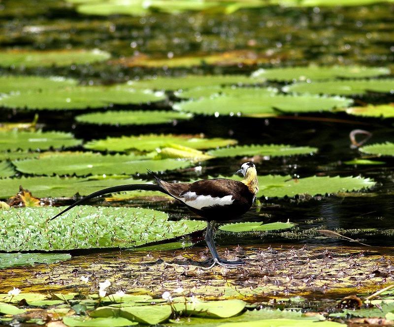 台湾鳥見旅行(その3)・・・_c0213607_18052893.jpg