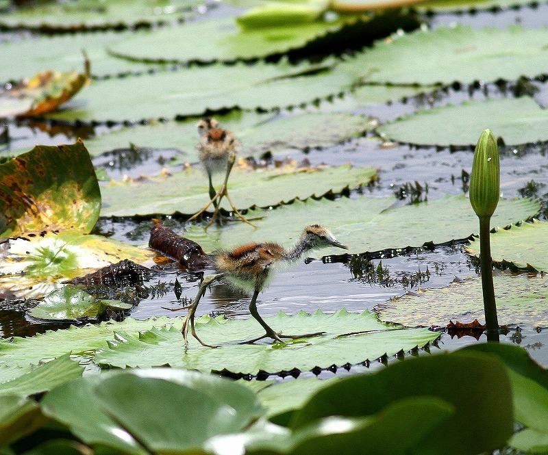 台湾鳥見旅行(その3)・・・_c0213607_18062036.jpg