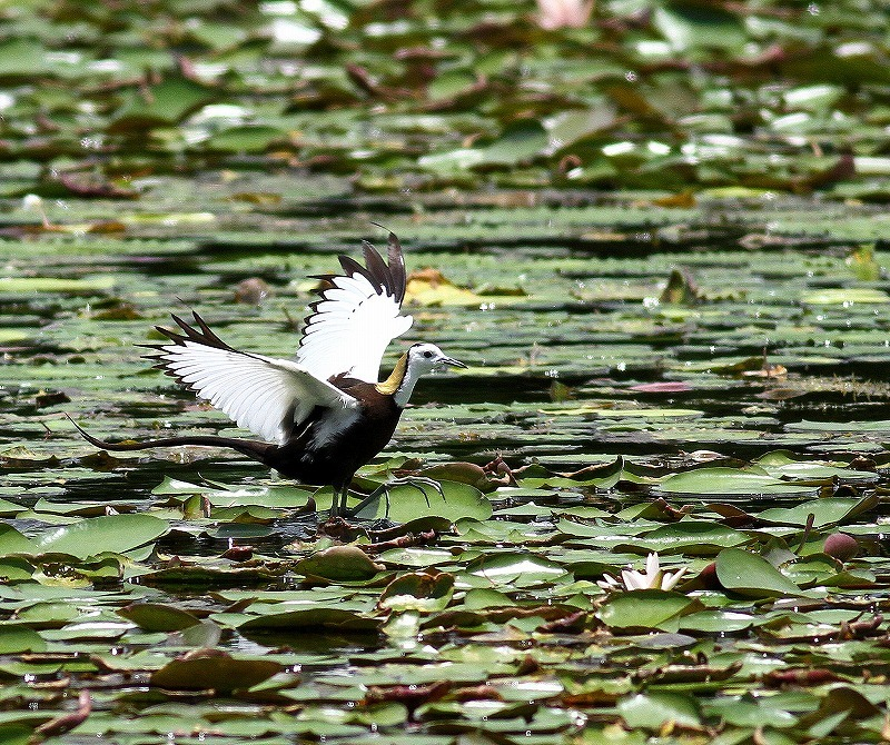 台湾鳥見旅行(その3)・・・_c0213607_18073047.jpg