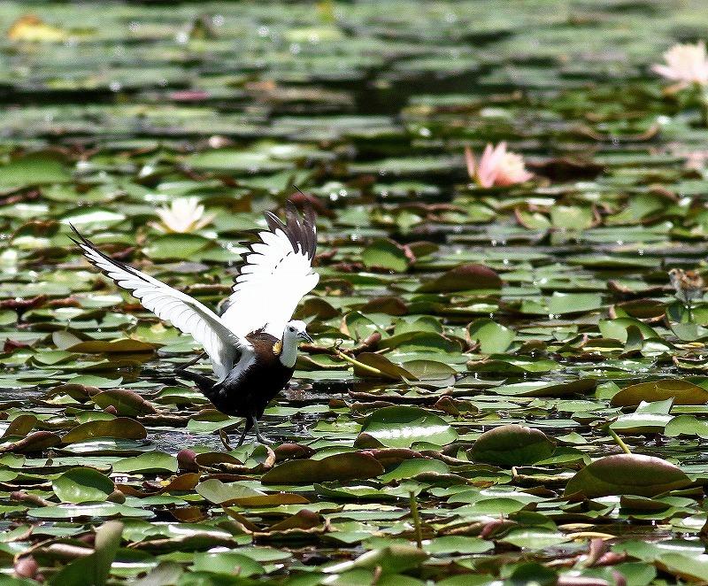 台湾鳥見旅行(その3)・・・_c0213607_18073567.jpg