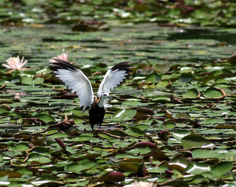 台湾鳥見旅行(その3)・・・_c0213607_18074032.jpg