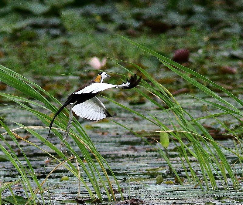 台湾鳥見旅行(その3)・・・_c0213607_18080987.jpg