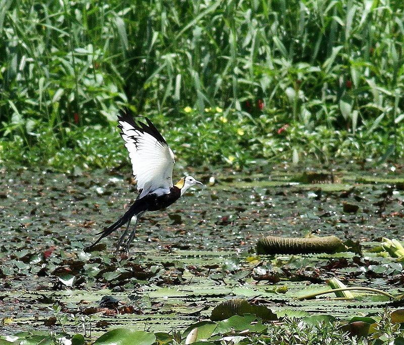 台湾鳥見旅行(その3)・・・_c0213607_18081545.jpg