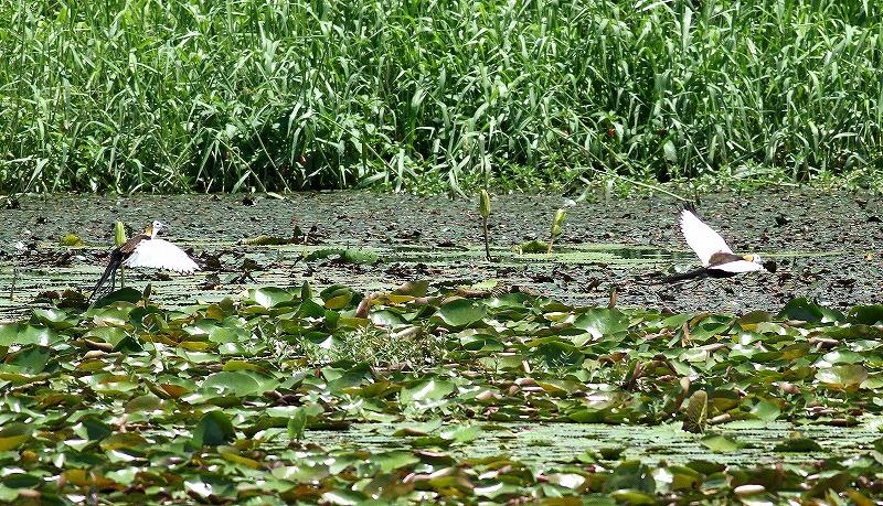 台湾鳥見旅行(その3)・・・_c0213607_18082025.jpg