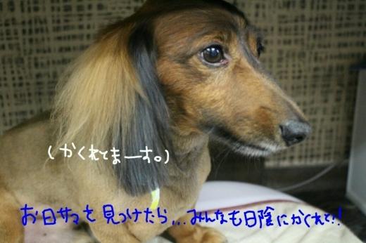 b0130018_20452153.jpg