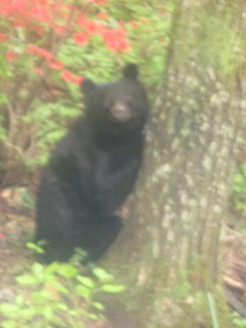 レゲエ熊 ①_f0005333_13453864.jpg