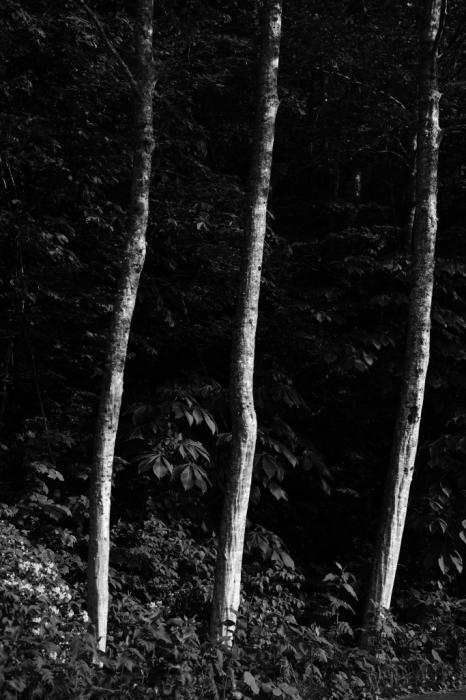 森の人たち Otus 85mm _f0050534_19211307.jpg