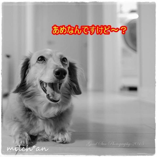 b0115642_21232488.jpg