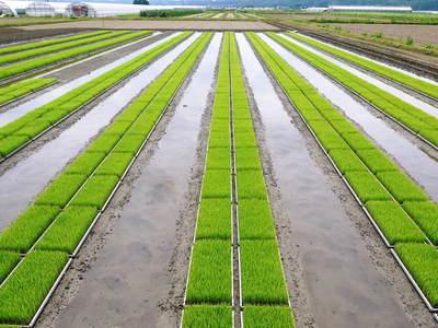 七城米 長尾農園 苗箱作り~美しすぎる苗床 惜しまぬ手間ひまで至高のお米を育てます(後編)_a0254656_16383474.jpg