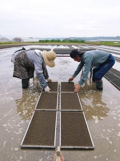 七城米 長尾農園 苗箱作り~美しすぎる苗床 惜しまぬ手間ひまで至高のお米を育てます(後編)_a0254656_16455892.jpg
