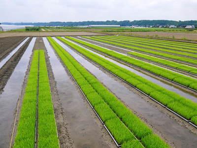七城米 長尾農園 苗箱作り~美しすぎる苗床 惜しまぬ手間ひまで至高のお米を育てます(後編)_a0254656_1705325.jpg