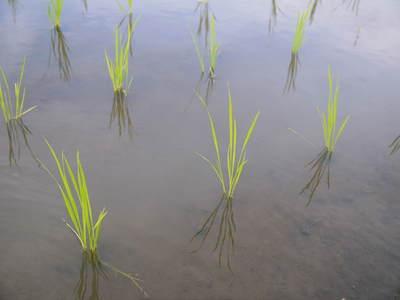 七城米 長尾農園 苗箱作り~美しすぎる苗床 惜しまぬ手間ひまで至高のお米を育てます(後編)_a0254656_1735057.jpg