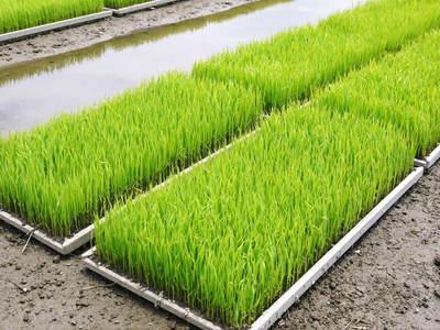 七城米 長尾農園 苗箱作り~美しすぎる苗床 惜しまぬ手間ひまで至高のお米を育てます(後編)_a0254656_1741747.jpg