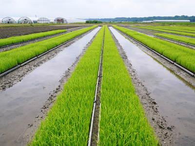 七城米 長尾農園 苗箱作り~美しすぎる苗床 惜しまぬ手間ひまで至高のお米を育てます(後編)_a0254656_1754521.jpg