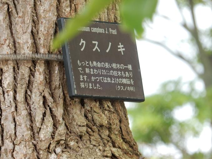 '16,6,25(土)こんな荒梅雨の日には・・・?_f0060461_1333467.jpg