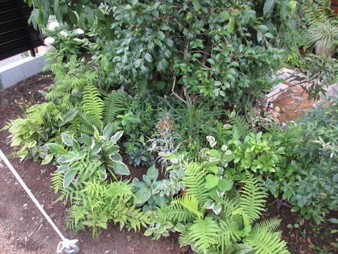 梅雨時の緑は豊か_a0243064_14424383.jpg