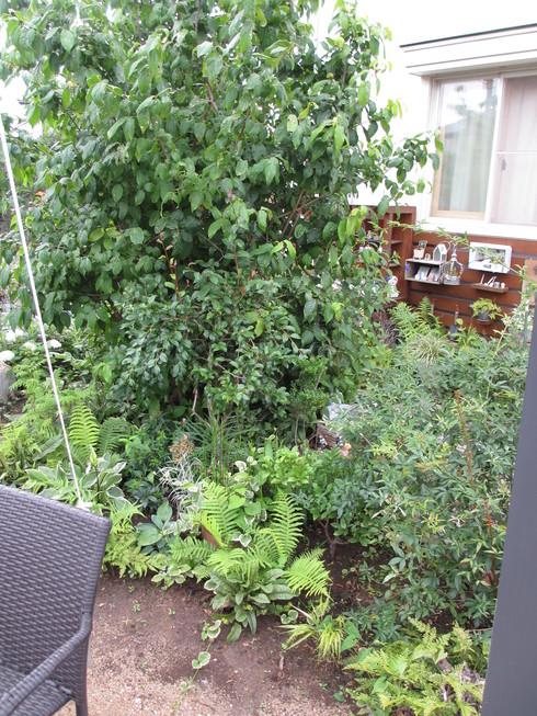 梅雨時の緑は豊か_a0243064_1443488.jpg