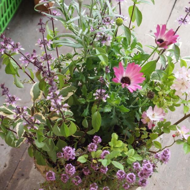 ハーブとお花の寄せ植え_a0292194_12264987.jpg