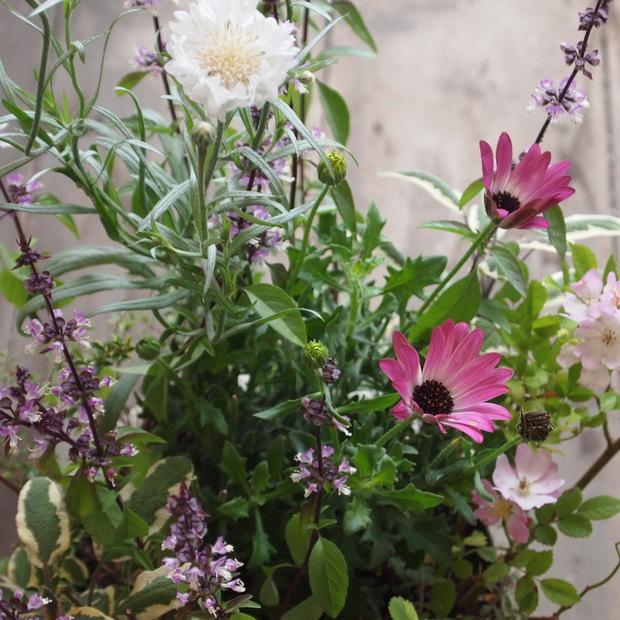 ハーブとお花の寄せ植え_a0292194_1227720.jpg