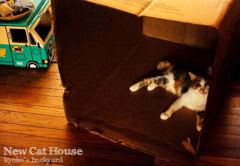 猫たちの新しいおうち_b0253205_03585319.jpg