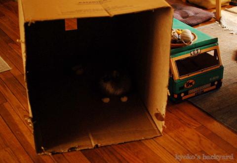 猫たちの新しいおうち_b0253205_03590559.jpg