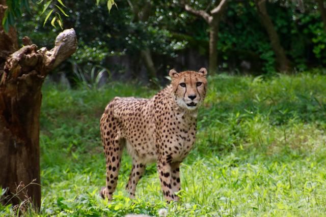 【多摩動物公園】part 1_f0348831_23585711.jpg
