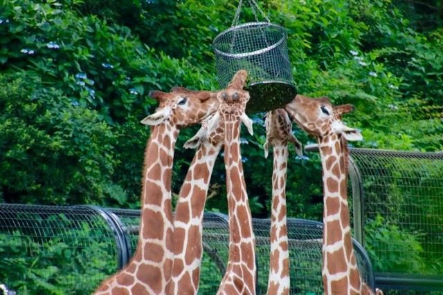 【多摩動物公園】part 1_f0348831_23594535.jpg