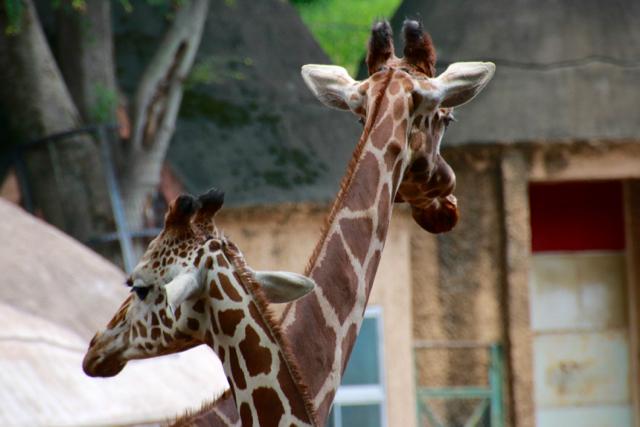【多摩動物公園】part 1_f0348831_23595744.jpg
