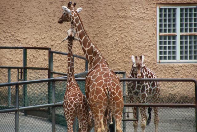 【多摩動物公園】part 1_f0348831_23595782.jpg