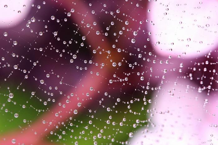 f0327034_21571595.jpg