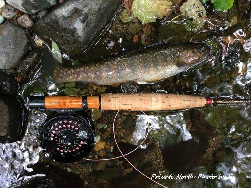今日の釣り_d0261148_14170837.jpg