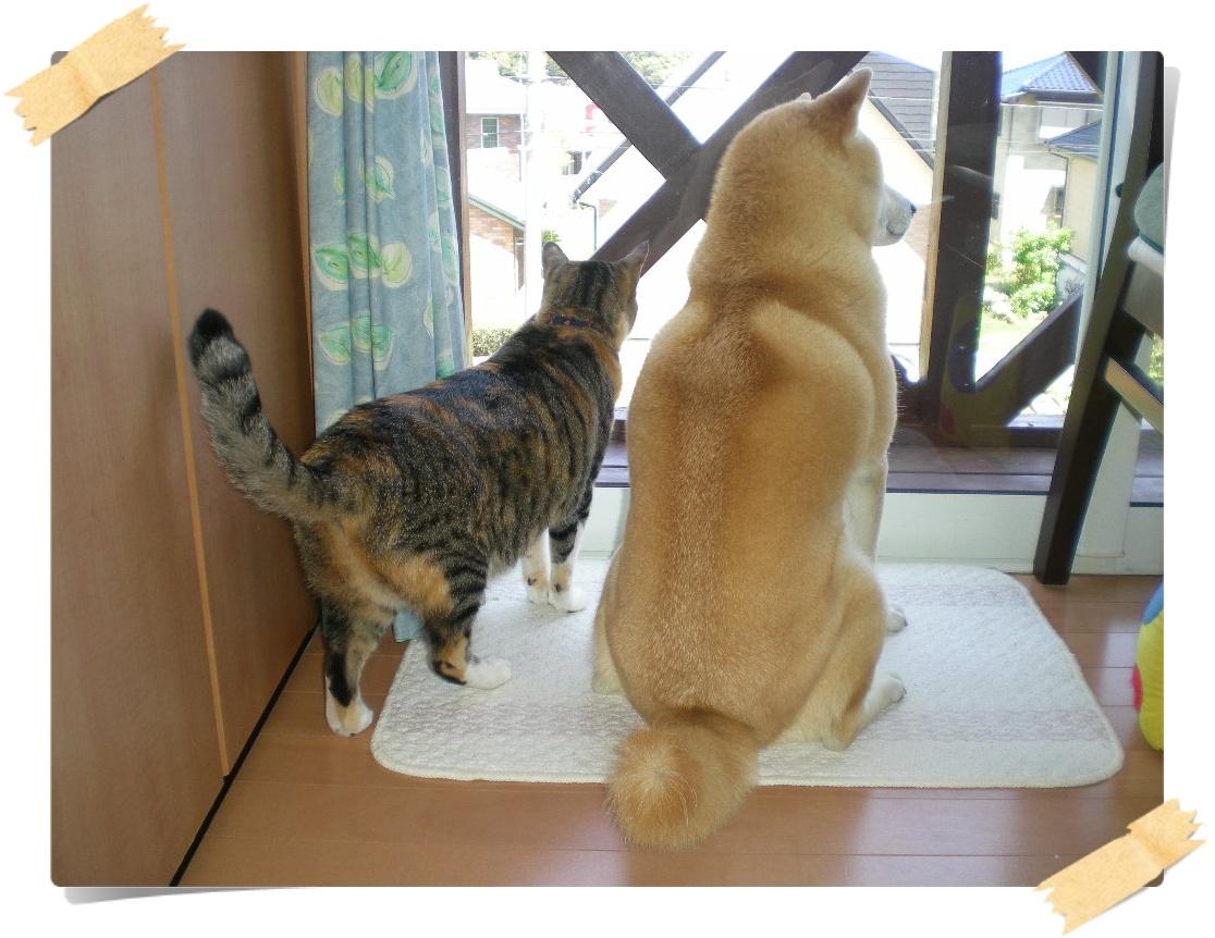 '16,6,26(日)愛ちゃんとこころちゃんの写真集!_f0060461_102437.jpg