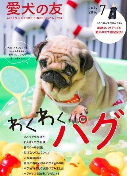 愛犬の友  7月号   わくわくパグ❤️    〔チャッピー編〕_d0105967_13473564.jpeg
