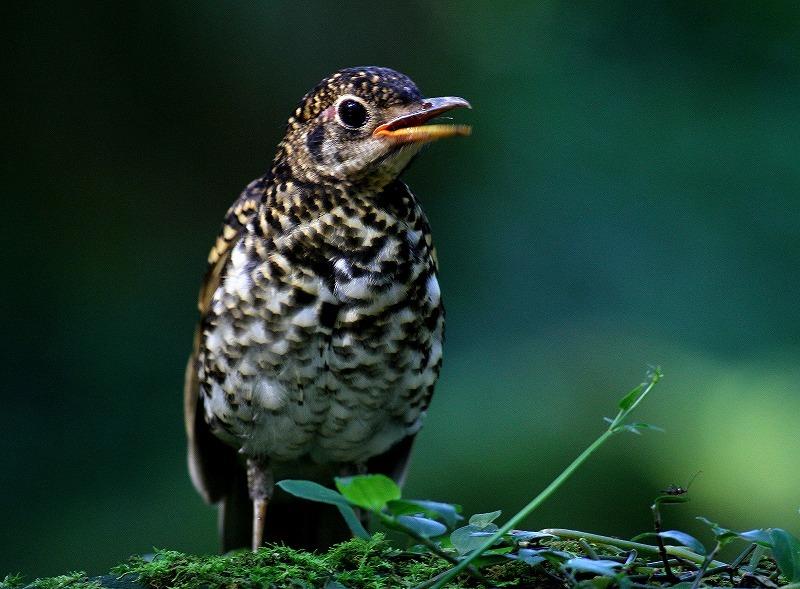 台湾鳥見旅行(その4)・・・_c0213607_17001297.jpg