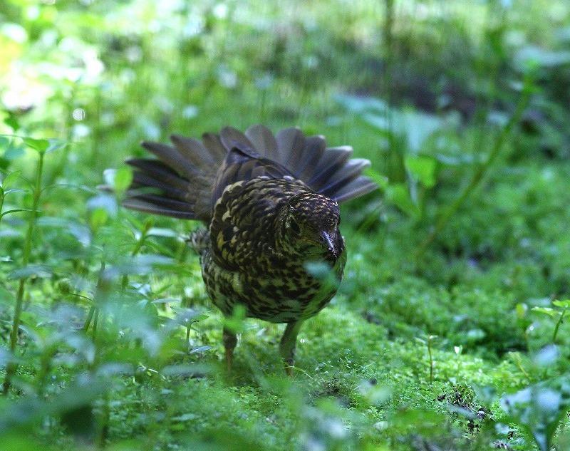台湾鳥見旅行(その4)・・・_c0213607_17014776.jpg