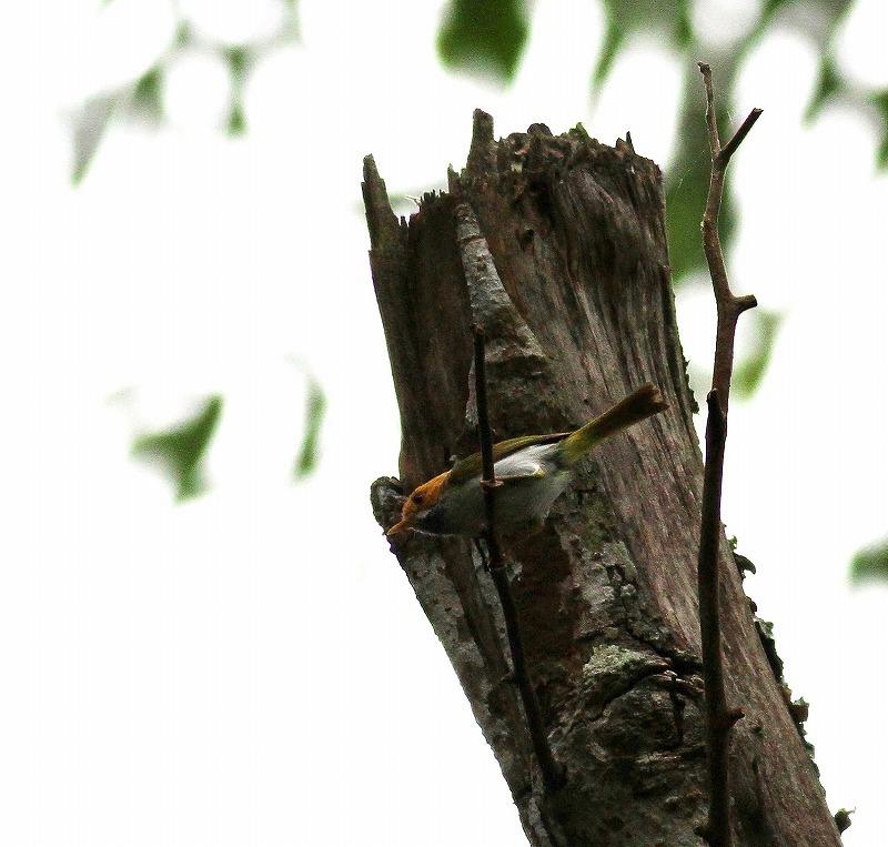 台湾鳥見旅行(その4)・・・_c0213607_17061697.jpg
