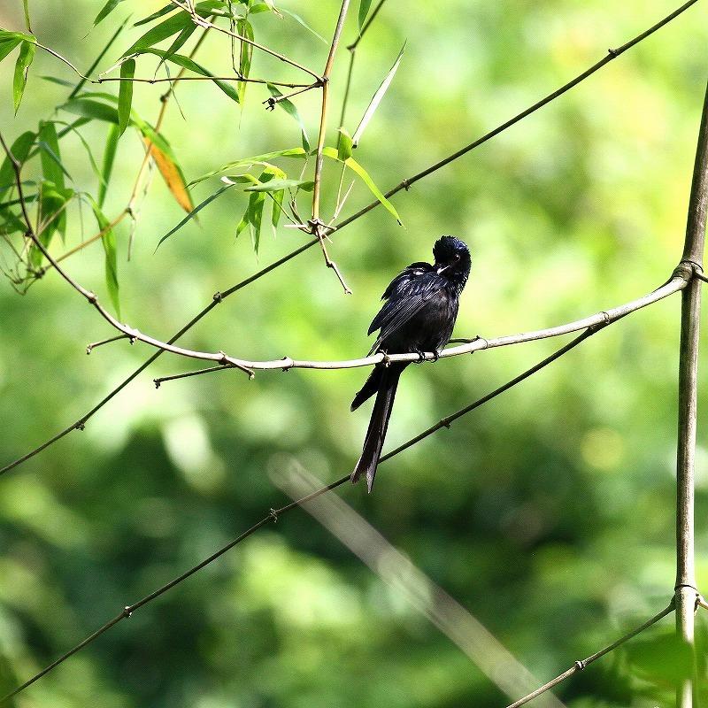 台湾鳥見旅行(その4)・・・_c0213607_17082094.jpg