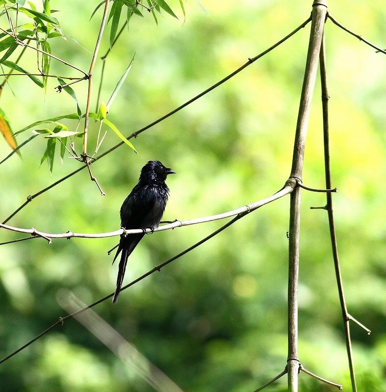 台湾鳥見旅行(その4)・・・_c0213607_17082422.jpg