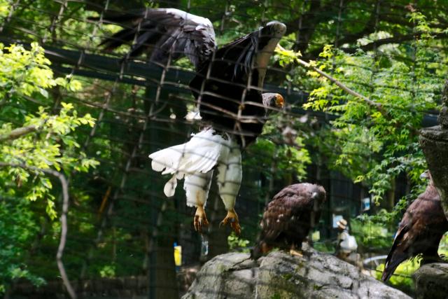 【多摩動物公園】part 1_f0348831_00000287.jpg