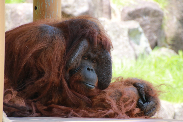 【多摩動物公園】part 2_f0348831_07585346.jpg