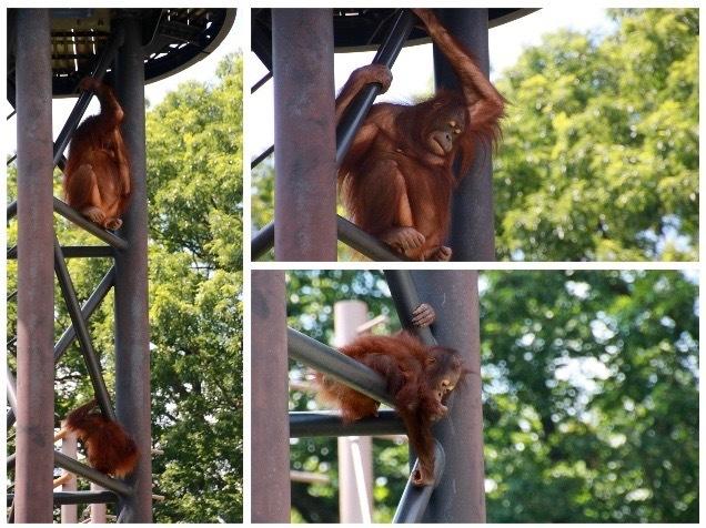 【多摩動物公園】part 2_f0348831_08102177.jpg