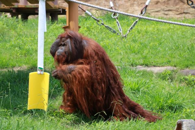 【多摩動物公園】part 2_f0348831_08175480.jpg