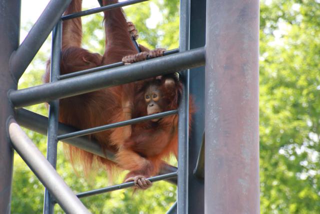 【多摩動物公園】part 2_f0348831_08180858.jpg