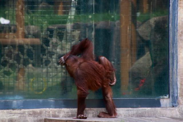 【多摩動物公園】part 2_f0348831_08182358.jpg