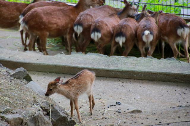 【多摩動物公園】part 3_f0348831_08185506.jpg