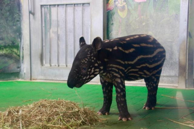 【多摩動物公園】part 3_f0348831_08185544.jpg